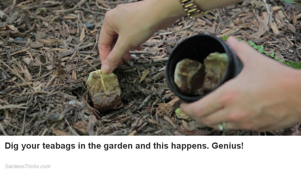 FeedBlitz Top Slot 100 pc no height attr no width